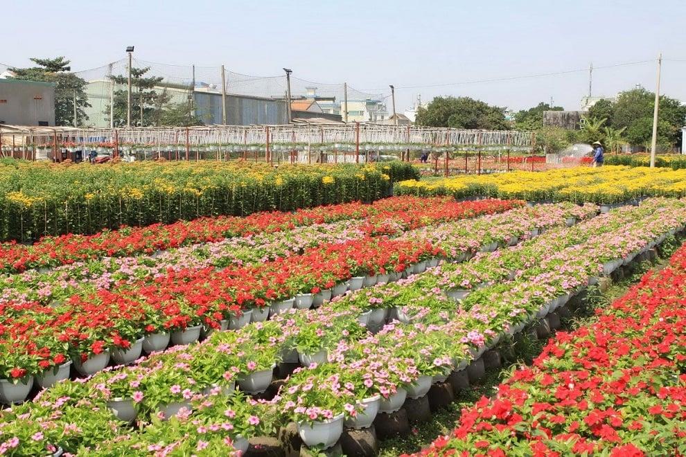 Làng hoa cảnh Chợ Lách với trăm hoa đua nở, khoe sắc rực rỡ