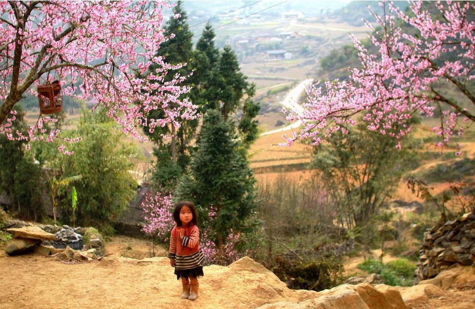 Mùa xuân Sapa với những cây hoa đào nở rộ sắc hồng khắp bản làng