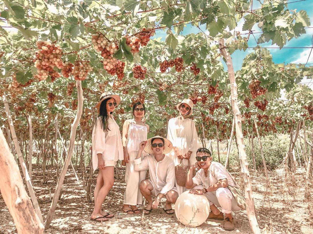 Nhóm khách du lịch check in tại vườn nho Ninh Thuận sai trĩu quả, xanh mát