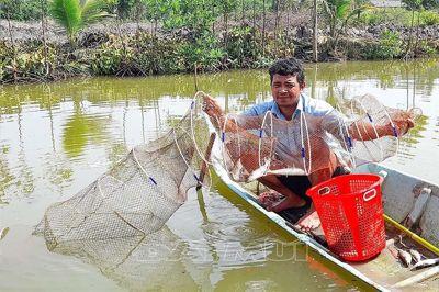 Triển vọng mô hình nuôi tôm sú quảng canh kết hợp cá đối mục