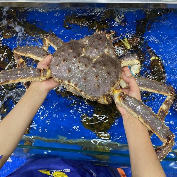 King Crab tươi sống