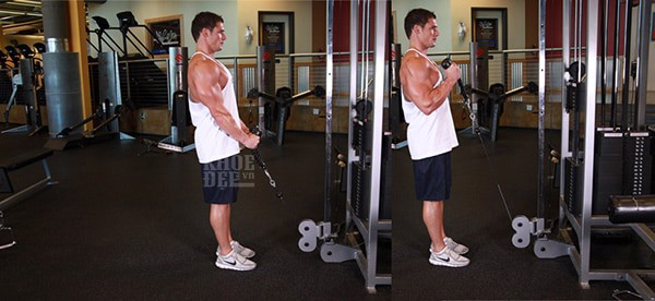 Cable Hammer Curls Rope Attachment