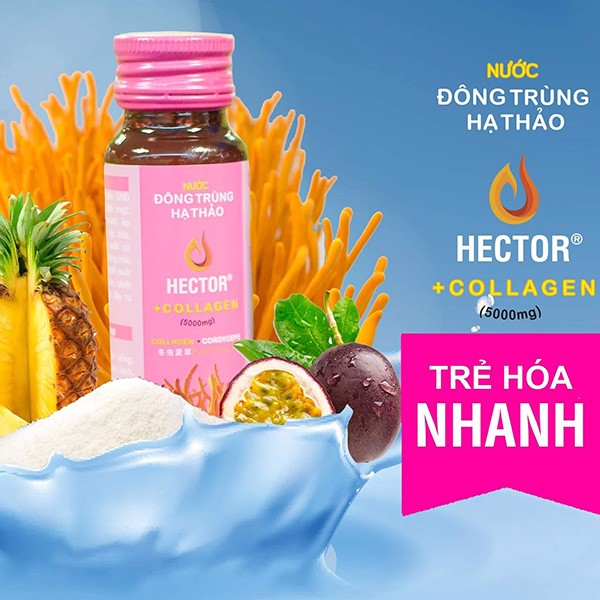 dong trung ha thao hector collagen