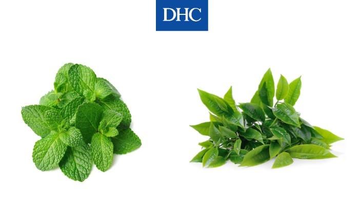 Nước trà xanh và bạc hà làm tăng quá trình trao đổi chất