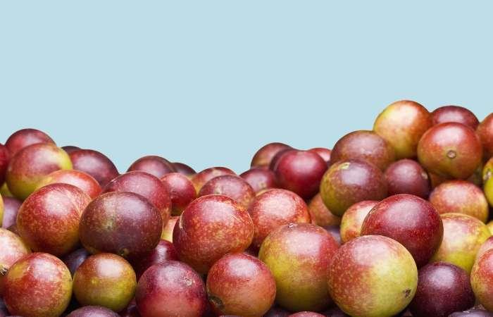 Hàm lượng vitamin C tự nhiên của Camu Camu được ghi nhận cao gấp 30 lần so với cam