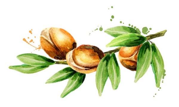 Argan oil -  Dầu argan - hoa thơm cỏ lạ