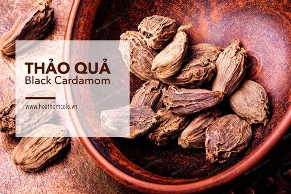 Tinh Dầu Thảo Quả - Black Cardamom Essential Oil