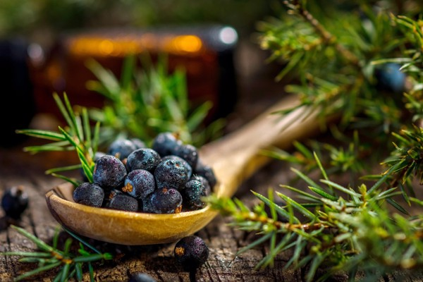 Tinh Dầu Bách Xù - Junipe Berry Essential Oil