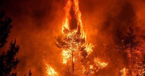 Cháy rừng Amazone