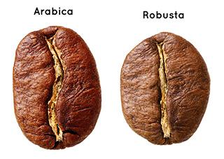 Phân Biệt Cà Phê Arabica và Cà Phê Robusta