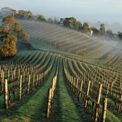 Discover Yering's Special Yarra Glen & Coldstream Vineyards