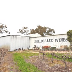Discover Skillogalee's Hand-Crafted Winemaking