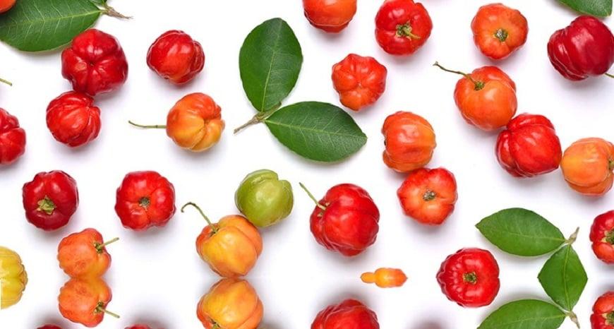 qua acerola cherry va loi ich