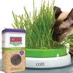 Catnip - Cat Grass