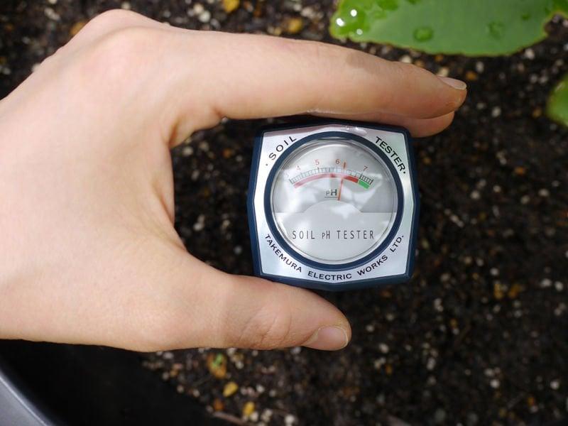 pH đất là gì? Cách cải tạo đất chua, đất kiềm, bảng tra cứu pH đất cho từng loại cây trồng