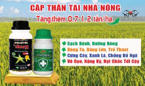 Cặp Đôi Thần Tài - Vinco 79 + Vitrobin -  Giải Pháp Tăng Thêm 700 - 1200 kg lúa/ ha
