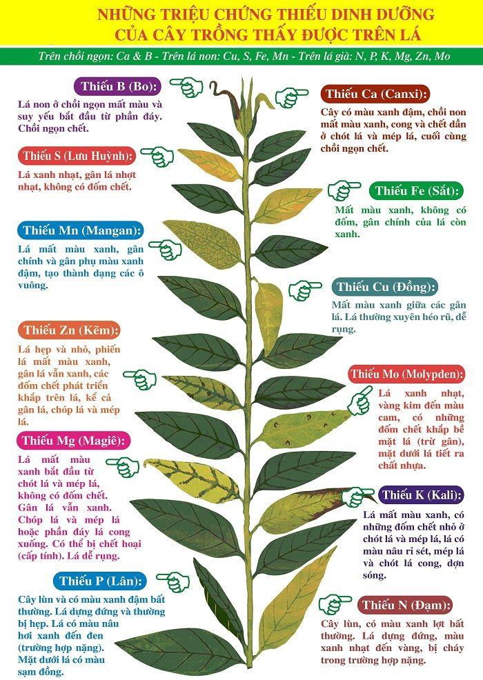Các nguyên tố dinh dưỡng quan trọng quyết định năng suất, chất lượng nông sản