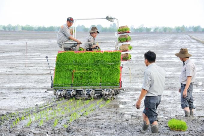 Kỹ thuật làm đất gieo mạ cho vụ hè thu