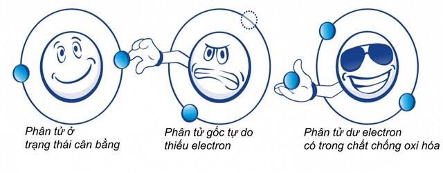 Cơ chế tác động gây oxy hóa là gì? (Nguồn: Internet)