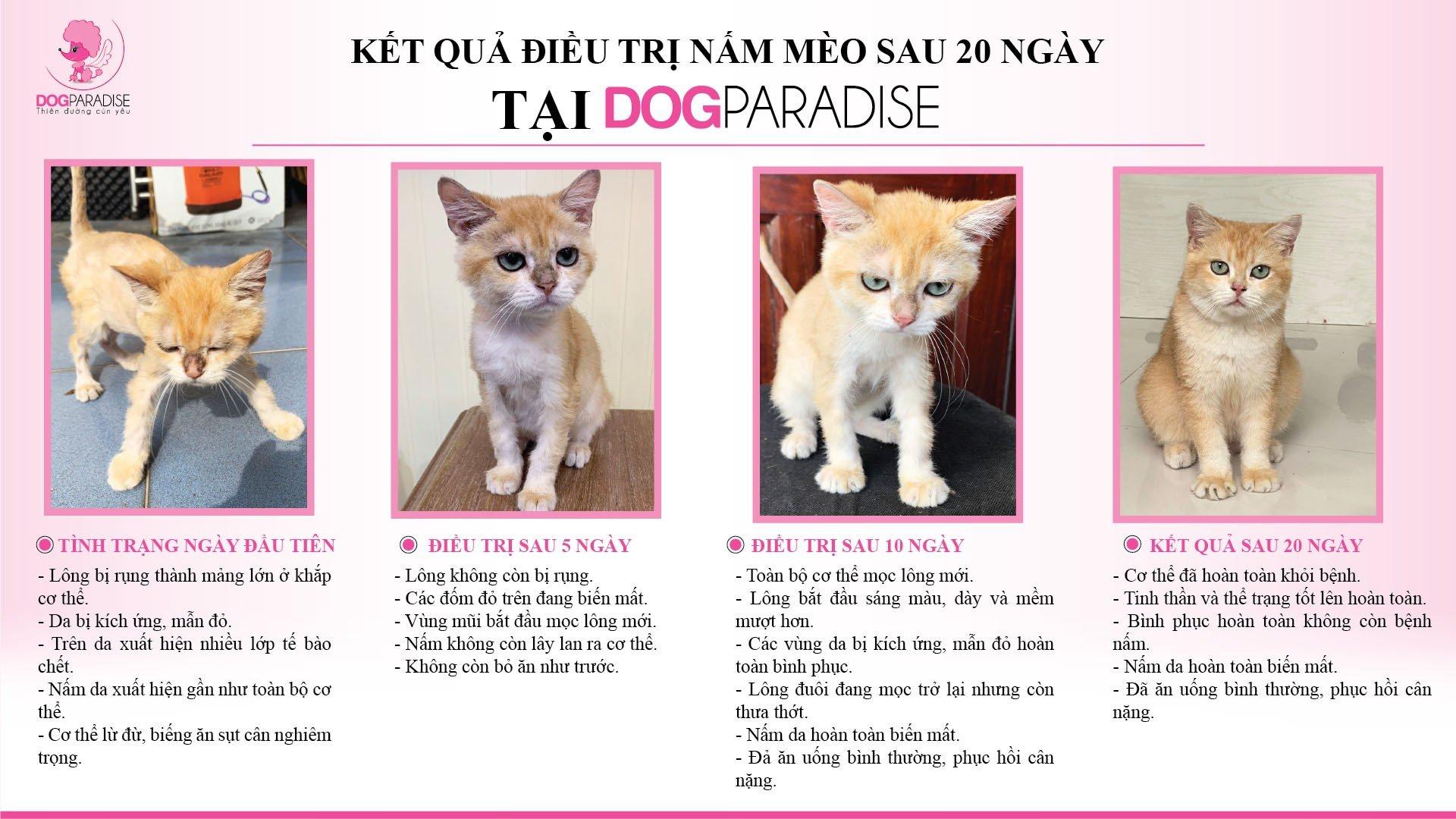 Dịch Vụ Trị Nấm Mèo
