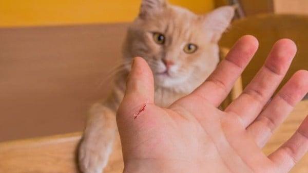 mèo hay cắn 1