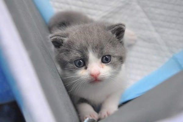 tuổi của mèo 2