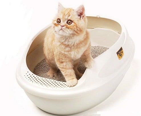 Bật mí cách dạy mèo đi vệ sinh đúng chỗ trong vòng 2 tuần (2020)