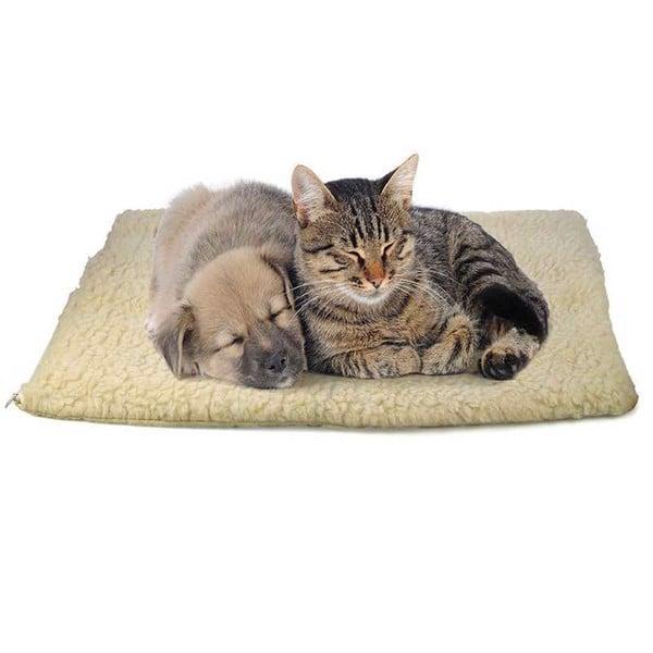 thuốc tránh thai cho mèo 4