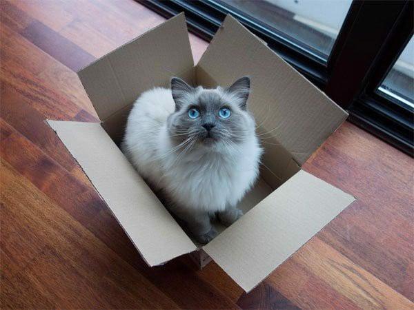 cách tự đỡ đẻ cho mèo 2