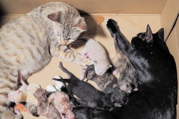 chăm sóc mèo đẻ 1