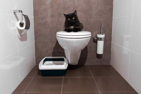 cách dạy mèo đi vệ sinh đúng chỗ 1