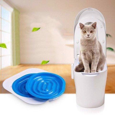 cách dạy mèo đi vệ sinh đúng chỗ 6