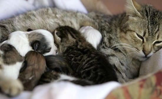 cách tự đỡ đẻ cho mèo 4