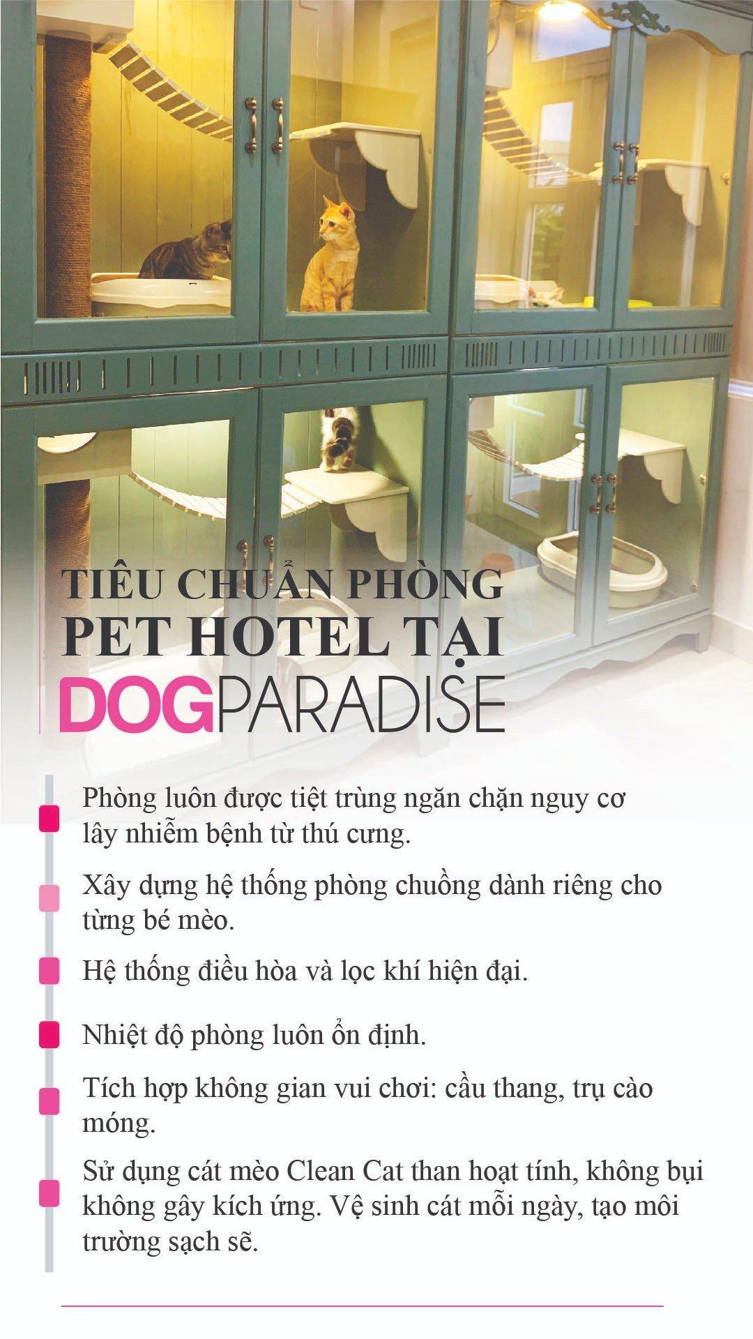 Pet Hotel Khách Sạn Cho Mèo