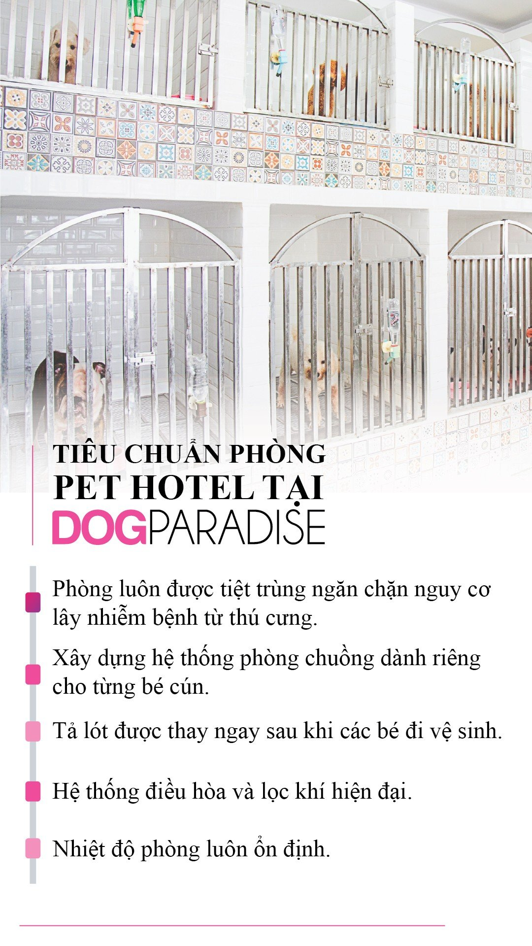 Pet Hotel Khách Sạn Cho Chó
