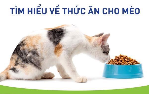 thực đơn cho mèo 2