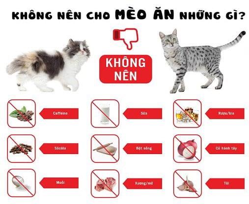 thực đơn cho mèo 3