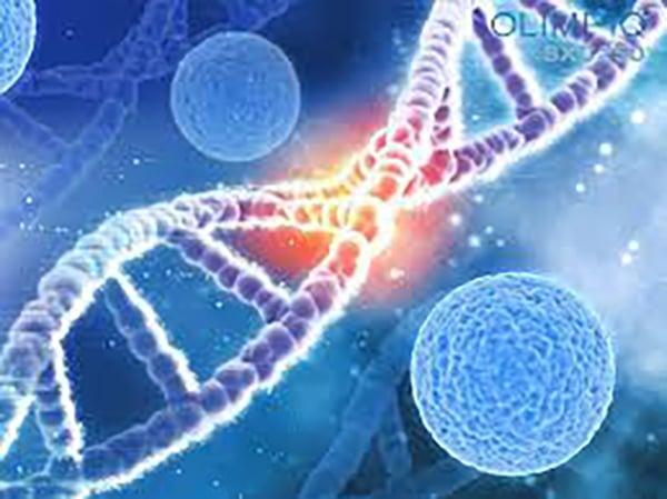 Tế bào gôc làm tăng khả năng tái tạo, phục hồi, ổn định cấu trúc cho da.