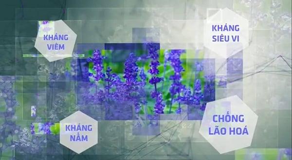 Chiết xuất các hoa thảo thiên nhiên ở cấp độ phân tử có thể kết hợp với thành phần tế bào gốc.