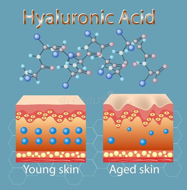Acid Hyaluronic đối với cấu trúc da