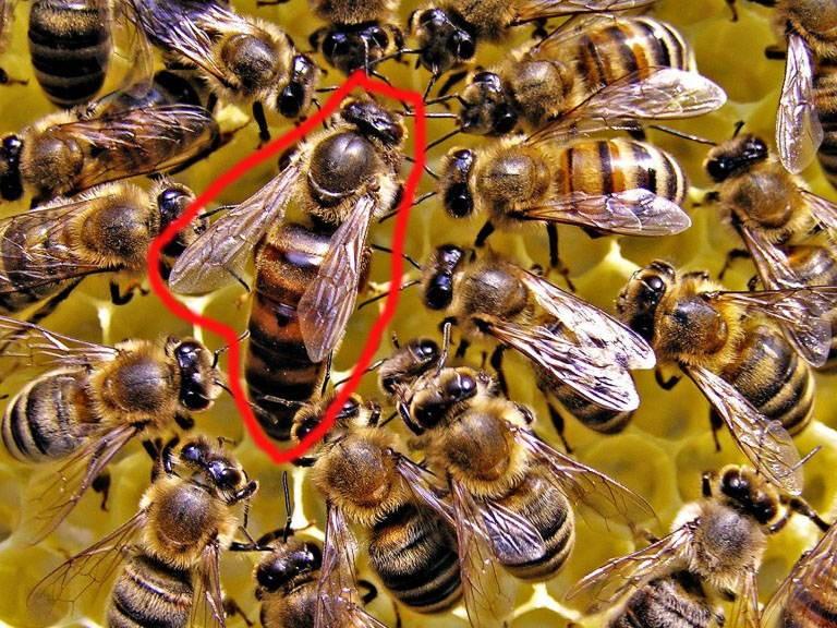 Mật ong tươi
