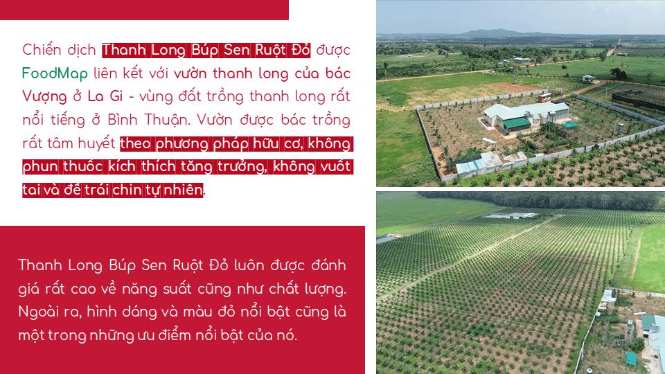 THANH LONG BÚP SEN RUỘT ĐỎ I Foodmap