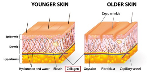 Collagen trong da