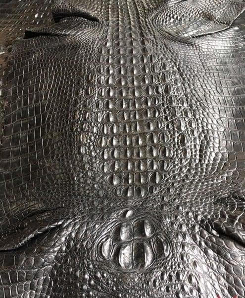 da cá sấu nguyên con bao nhiêu tiền một tấm 3