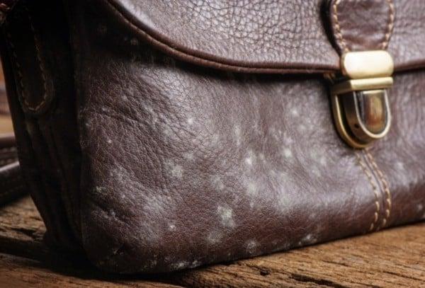 Bảo dưỡng làm sạch khi sản phẩm đồ da bị lên mốc
