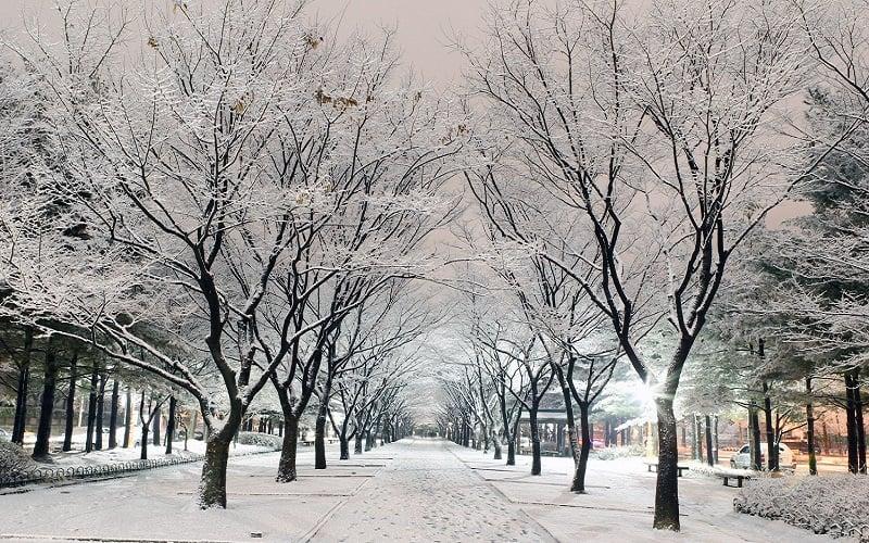 tuyết rơi ở hàn quốc