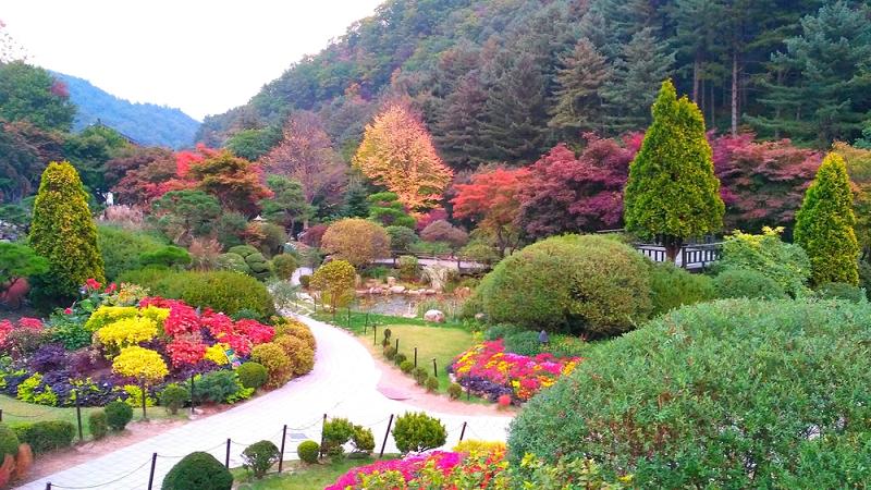 Vườn hoa Hàn Quốc đẹp