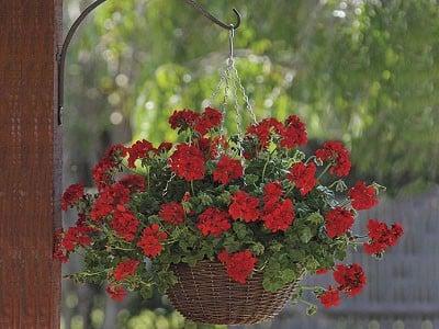 cach-trong-cham-soc-hoa-phong-lu