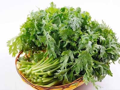 Cách trồng cải cúc tại nhà siêu đơn giản | Nông Nghiệp Phố