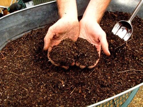 Đất sạch trồng rau trên thị trường đã đầy đủ dinh dưỡng chưa? | Nông Nghiệp Phố